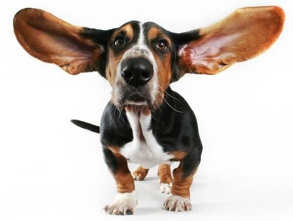 Ajutor pentru câinii supraponderali